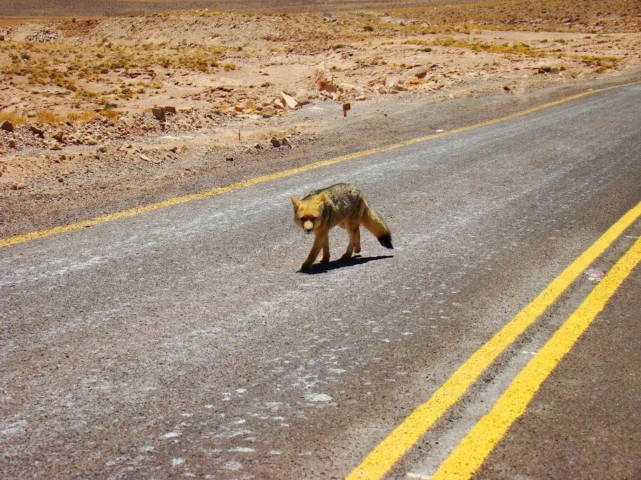 Presencias en las carreteras de San Pedro