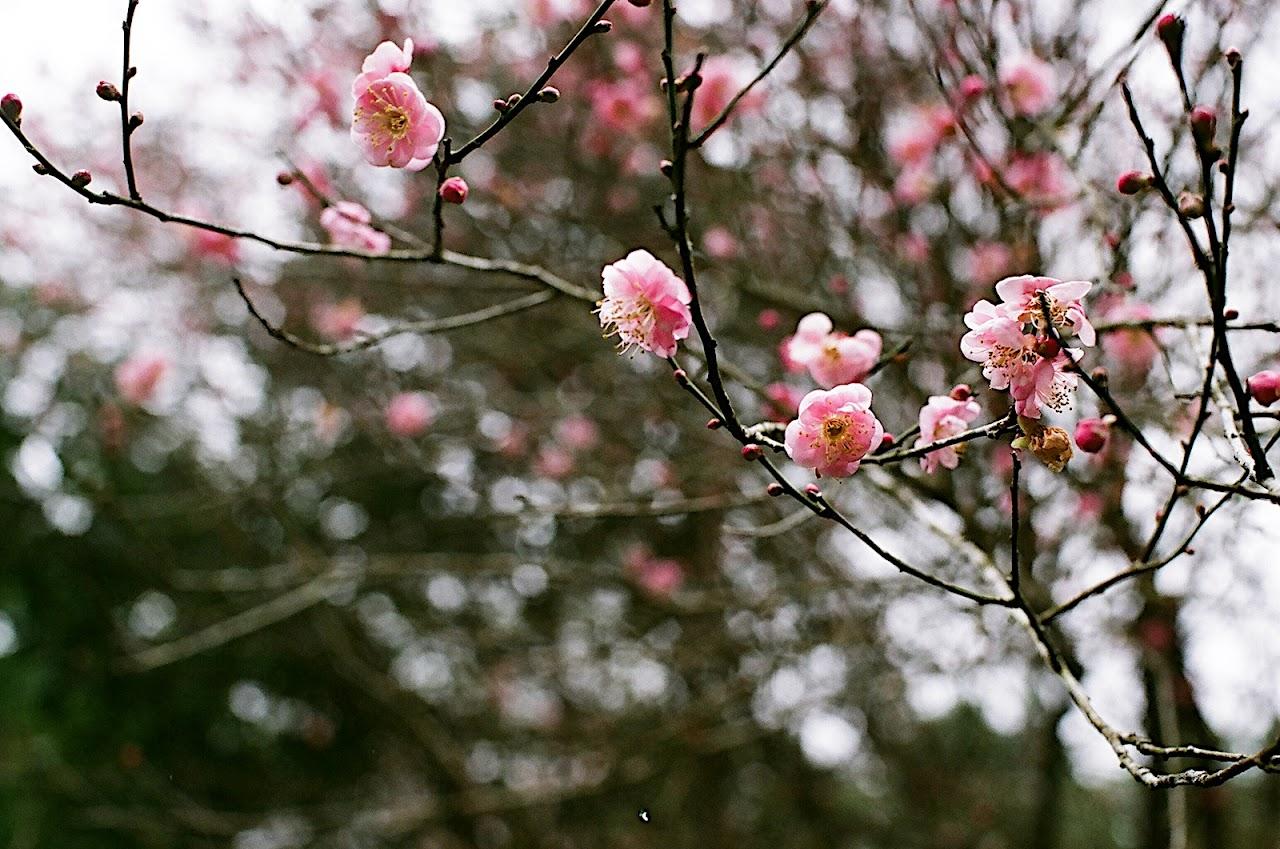 桃源仙谷走春