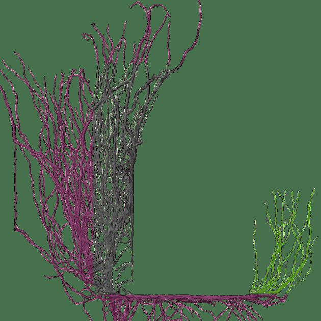 Branchbrokenwing