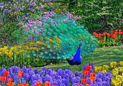 Garden Magick 2