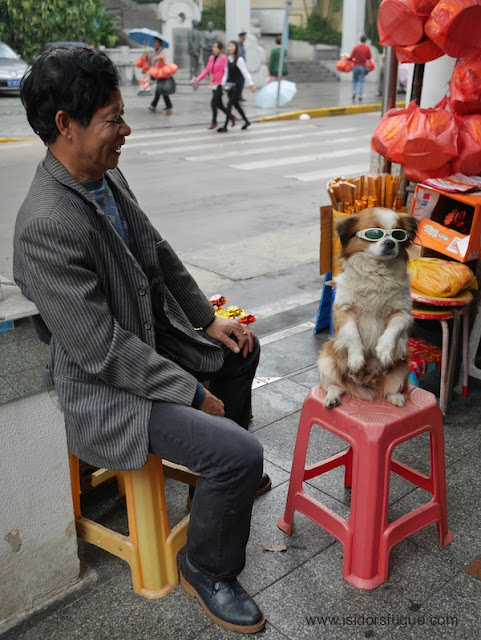 man sitting next to a small dog wearing sunglassess while standing on a stool