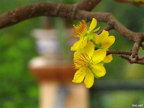 thơ mùa xuân tươi