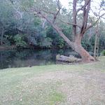 Willow Tree Picnic Area (172626)