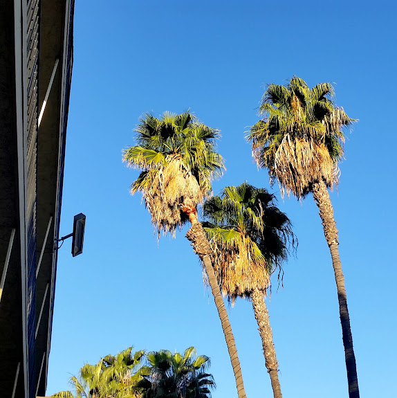 Palm trees outside our hotel in San Diego