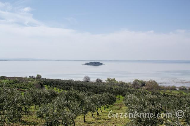 zeytinlikler ve Uluabat Gölü manzarası