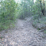 Ridgetop trail Olney State Forest  (365192)