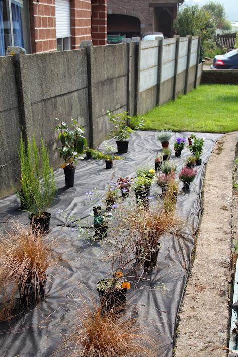 Nouvelle maison dit aussi nouveau jardin... IMG_9517