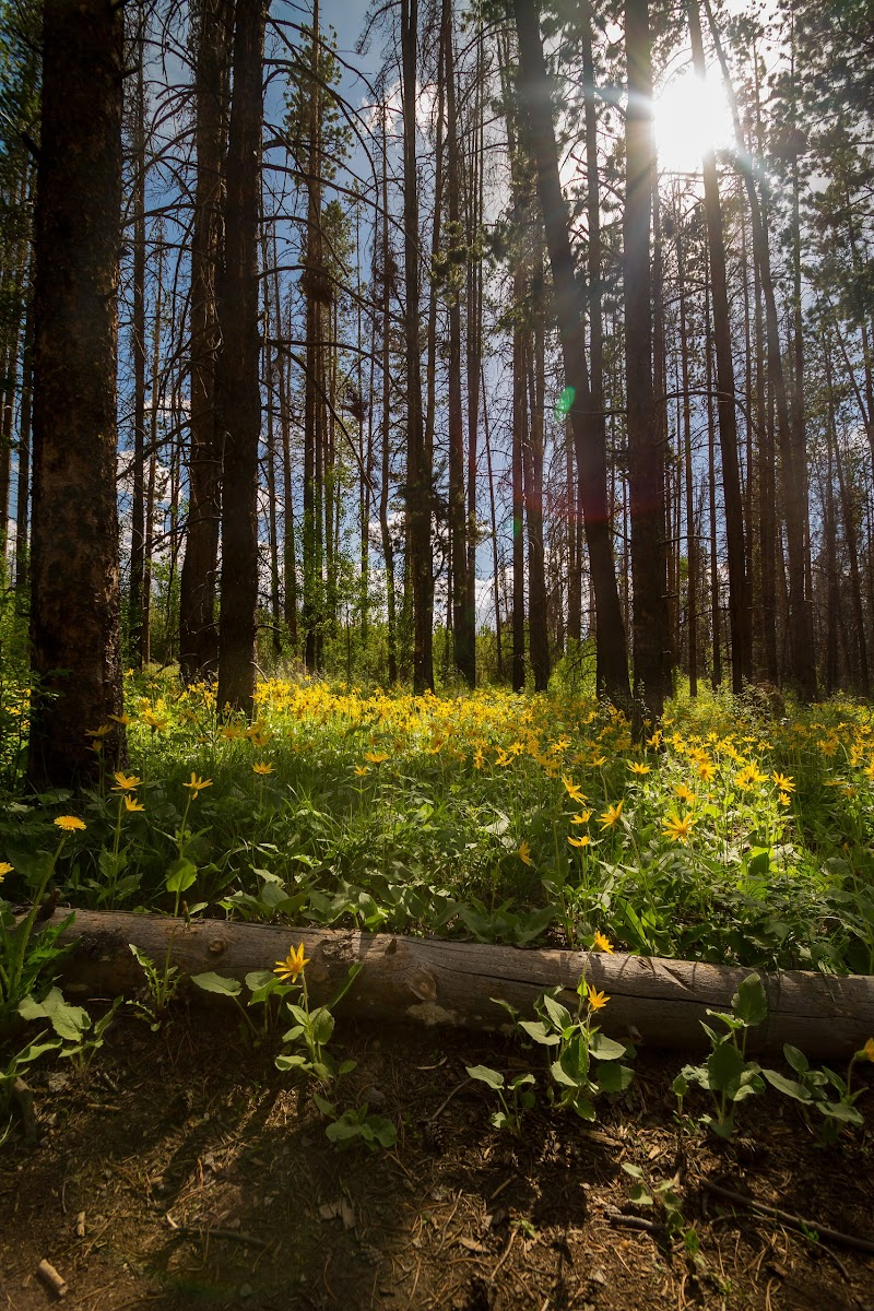 Yellow wildflowers in forest