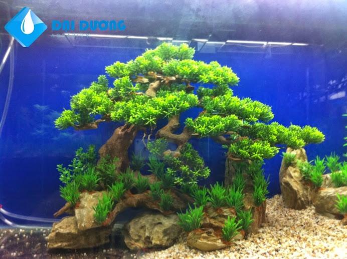lũa bonsai hồ cá thủy sinh