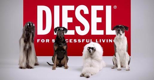 diesel_eyewear_dogs_2012
