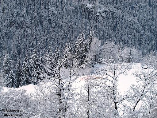 Schi Austria