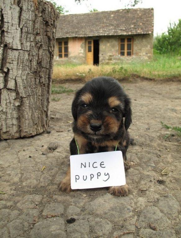 Cute Funny Animals