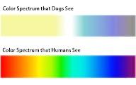 cores na visão dos cães