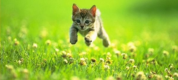 Pinterest Kitten