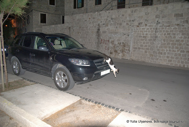 Кошка в Хорватии