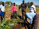Glad Sibuyi School Gadeni (garden) In the gadeni (garden) will (we) have a plats (plants): sipenachi (spinach) and tometos and onions and PoPos (papayas) and chiles (chili peppers). All the Plats (plants) need water and mulching in the special graas (grass) not green graas and plats (plants) a letters (lettuce) and the Cabbeges and Green Papir (bell peppers) and beetroot this one a verry nice in My Garden All the Plats (plants) will need lots of water and lotsi of marnuwasi (manure/fertilizer).