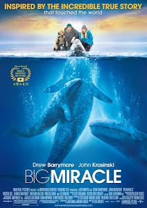 Phép Màu - Big Miracle poster