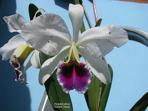 Растения из Тюмени. Краткий обзор - Страница 2 5672738429_2bcf5265e8