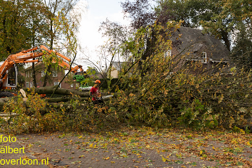 Bomen gekapt Museumlaan in overloon 20-10-2014 (32).jpg
