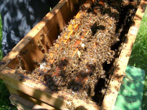 коши для ловли пчел