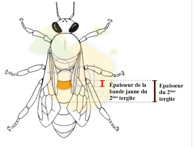 Biom233;trie