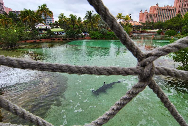 Багамы и Флорида в круизе на новичке флота NCL: Norwegian Breakaway, март 2014