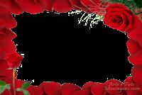 molduras-para-fotos-gratis-rosas-vermelhas-600x450