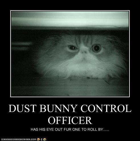 Dust Bunnies No Thanks Confessions Of A Northern Belle