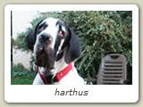 Harthus