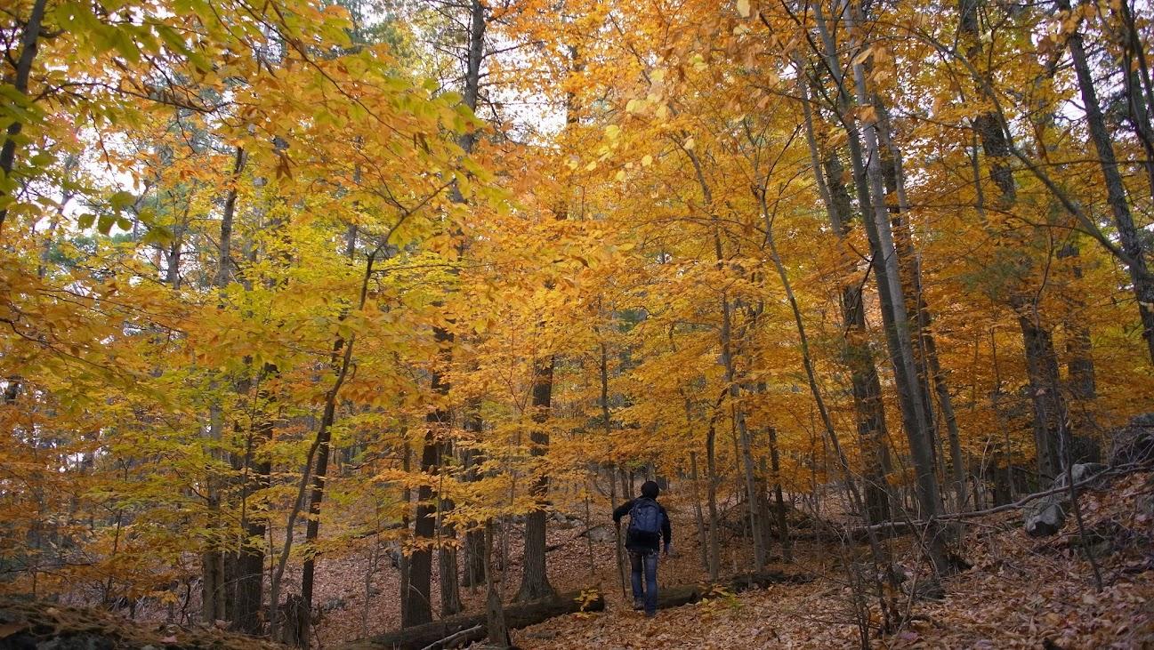 姑且不論我們所處的情況,這林子很漂亮