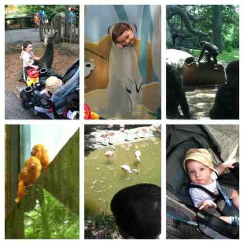 Zoo Atlanta field trip