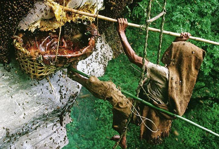 Пчеловодство в Непале