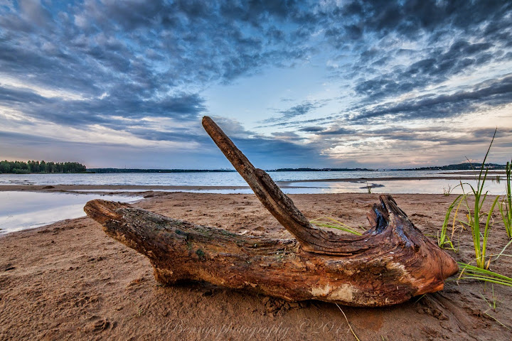 driftwood in Luleå, Sweden. Photographer Benny Høynes