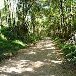Walking along the dense forest on Brush Creek Rd South of Cedar Brush Trackhead (365792)