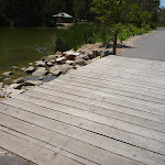 Timber bridge by pond with black swan in Richley Reserve in Blackbutt Reserve (401578)