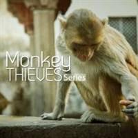 Monkey Thieves Series - Băng đảng khỉ ở ấn độ