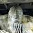 Dezi Miller avatar image