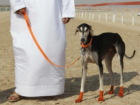 World's most outrageously expensive dogs 5