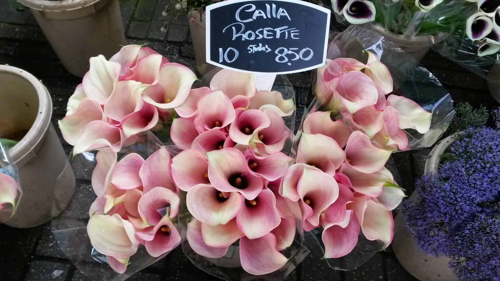 Bloemenmarkt, Amsterdam, Elisa N, Blog de Viajes