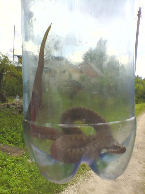 палка для ловли змей