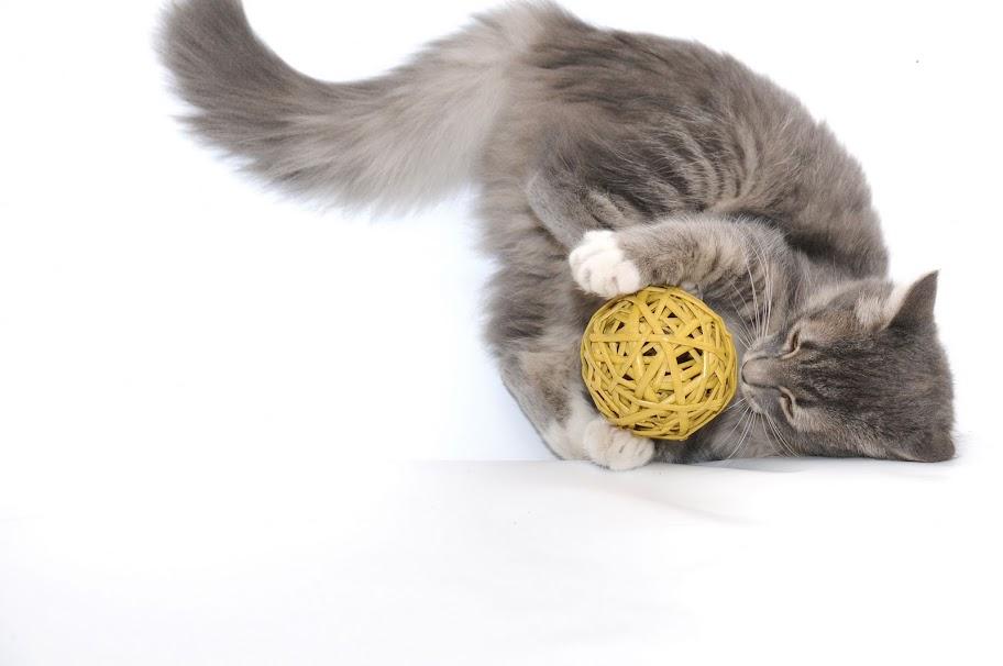 Во что поиграть с котенком 2 месяца