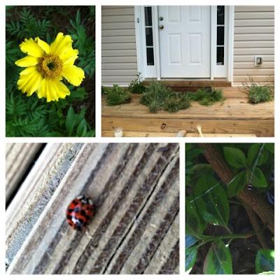 homeschool, nature, drying herbs