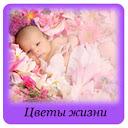 Цветы жизни - блог мамы Милы