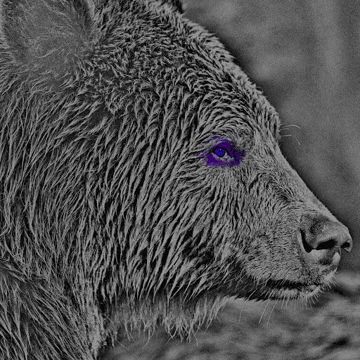Greybear
