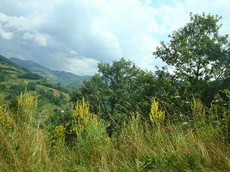Растительность в горах Сербии
