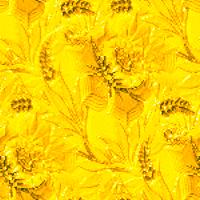 yellow1_jr.jpg