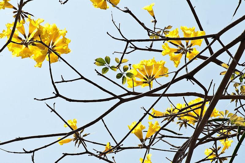 春天降臨。百花齊放