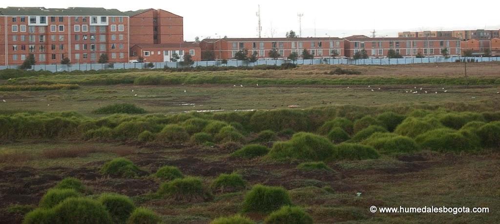 Humedal El Burrito, 3 de Octubre de 2012