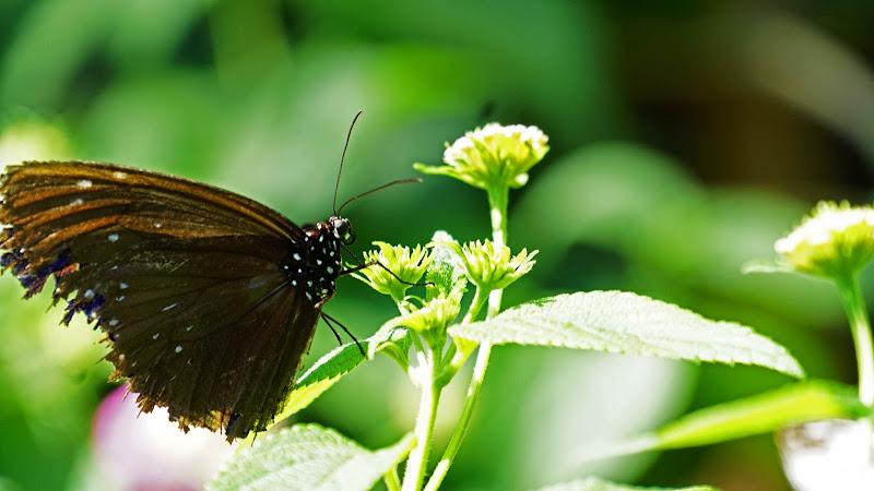 多摩動物公園 蝶 写真2