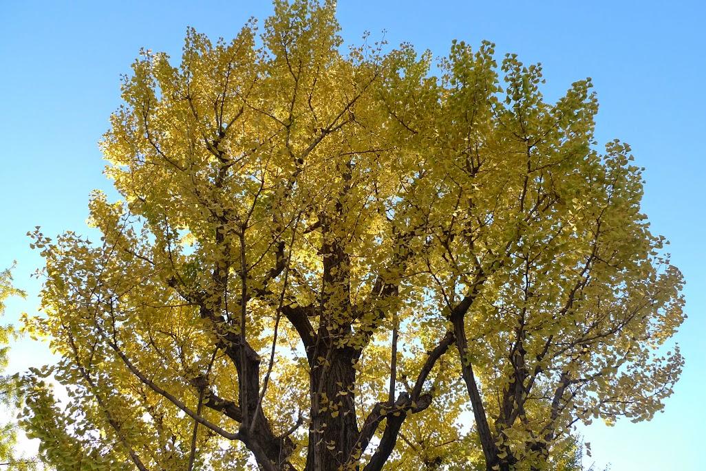 tokyo automne